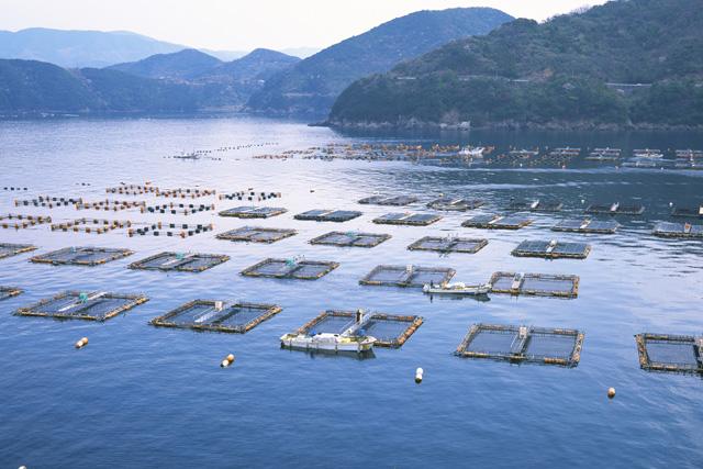Nearshore Fishery